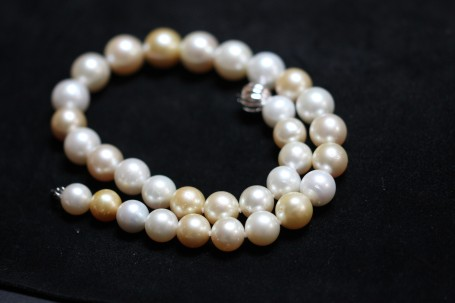 south sea pearlsIMG_3581